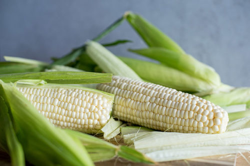 white corn in husks, ready to be cooked in the electric pressure cooker